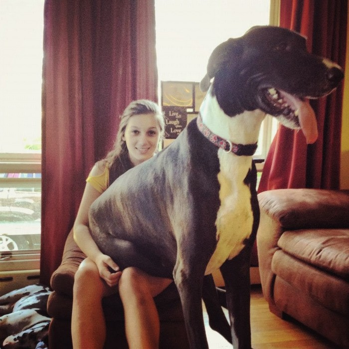 big-dogs-think-they-are-lap-dogs-23