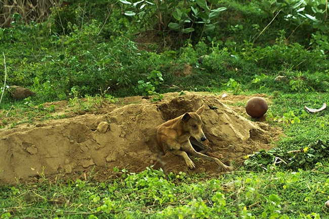 dog-by-owners-grave-01