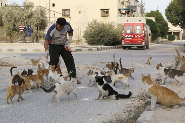 syrian-ambulance-driver-feeds-abandoned-cats-01