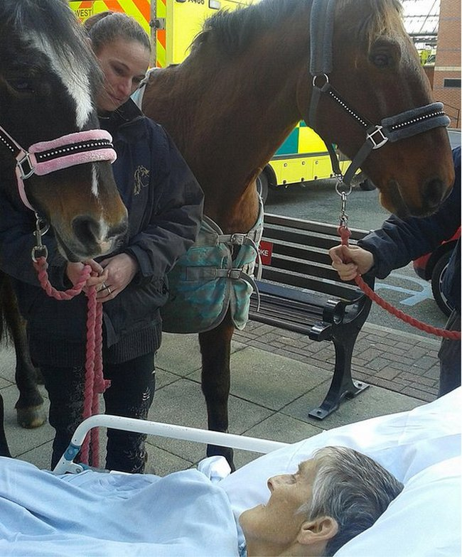 cancer-patient-says-goodbye-to-favorite-horse-02