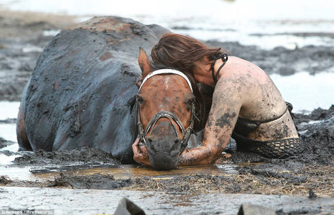 horse-stuck-in-mud-rescued-by-heroes-01