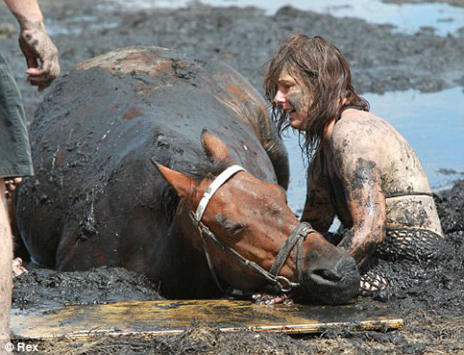 Horse Stuck In Mud Was Rescued By Some Real Life Heroes