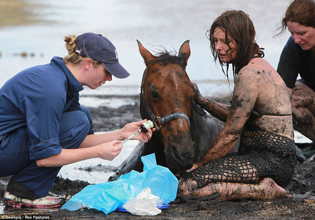 horse-stuck-in-mud-rescued-by-heroes-05