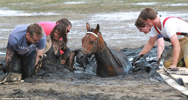 horse-stuck-in-mud-rescued-by-heroes-09