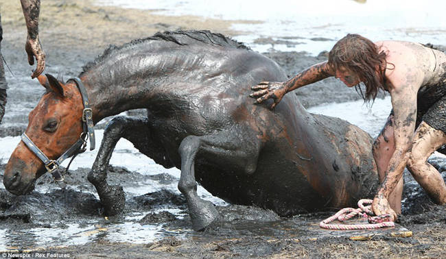 horse-stuck-in-mud-rescued-by-heroes-10