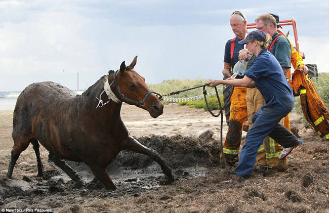 horse-stuck-in-mud-rescued-by-heroes-11