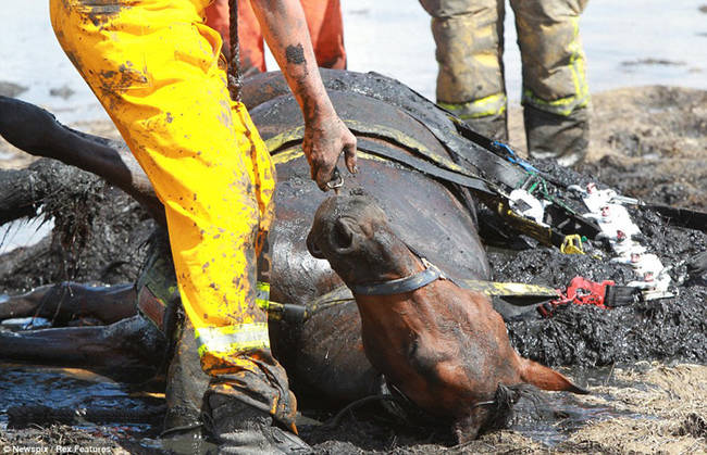 horse-stuck-in-mud-rescued-by-heroes-12